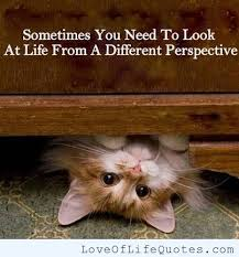 kitten-quote