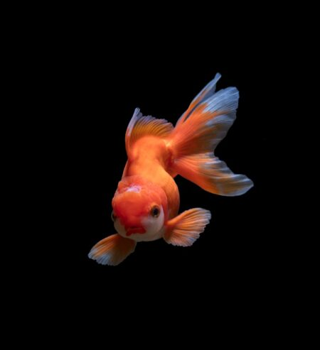 Pet Fish-Social Isolation - Dr. Barb
